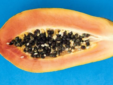 Papaya that resembles a vulva