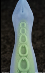 The Tentacle - The Tentacle is a dildo produced by Bad Dragon.