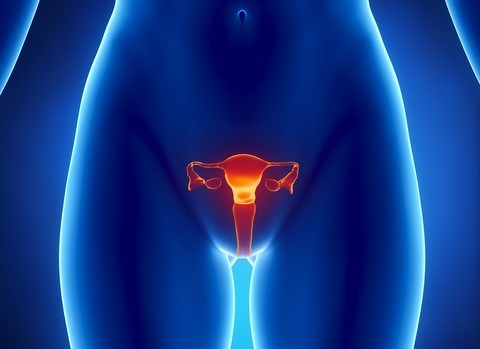 Lab-Grown Vaginas: Yes, It's a Thing