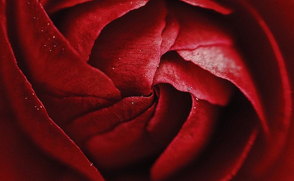Erotica: Evil Flowers